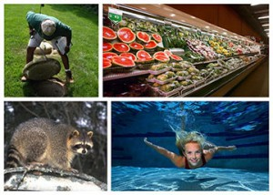 Images of a grocery store, pool, raccoon and a private well